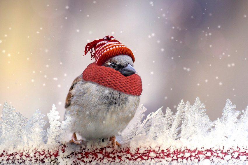 czapki na zimę